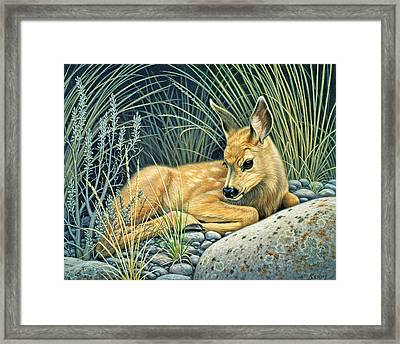 Waiting For Mom-mule Deer Fawn Framed Print by Paul Krapf