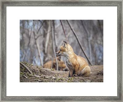 Waiting For Mom Framed Print by Thomas Young