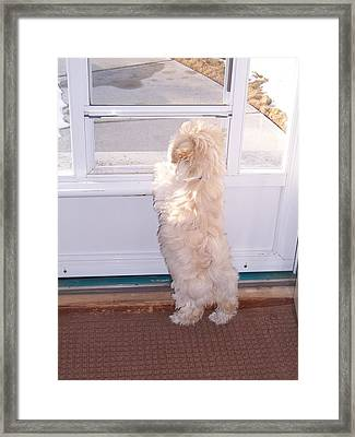 Framed Print featuring the photograph Waiting For Papa by Sheila Byers