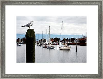 Waiting For Sandy Framed Print by Lon Casler Bixby