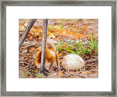 Waiting For Sibling Framed Print by Zina Stromberg