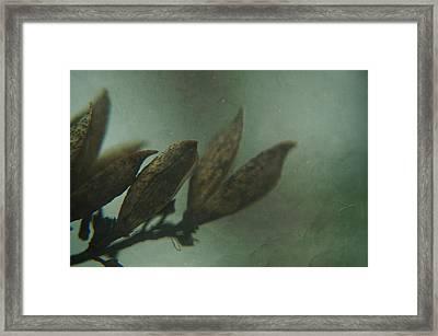 Waiting For Spring 6 Framed Print by Rhonda Barrett