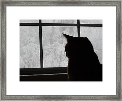 Waiting For Spring Framed Print
