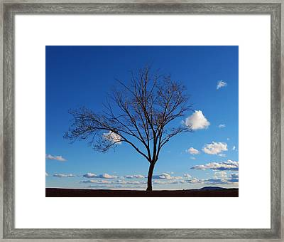 Waiting For Spring Framed Print by Feva  Fotos