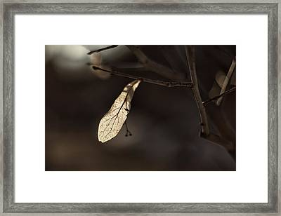 Waiting For Spring Framed Print by Jakub Sisak