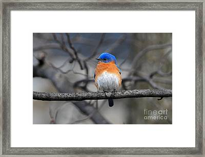 Waiting For Spring Framed Print by Olivia Hardwicke