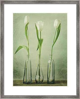 Waiting For Spring Framed Print by Steffen Gierok