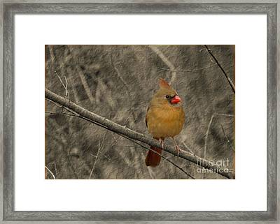 Waiting For Supper Framed Print