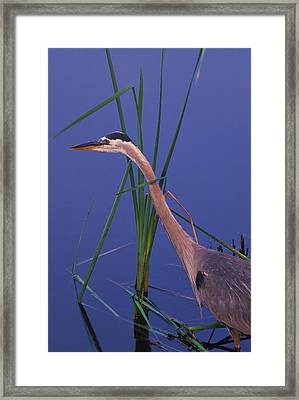 Waiting For The Catch Framed Print by Bucko Productions Photography