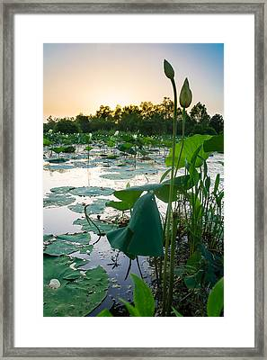 Waiting For The Day To Bloom Framed Print