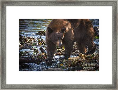 Waiting For The Fish To Come Framed Print by Mitch Shindelbower
