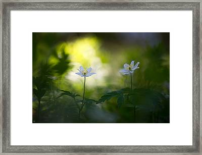 Waiting For The Light Framed Print by Sarah-fiona  Helme