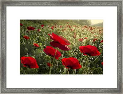 Waiting For The Morning Framed Print by Debra and Dave Vanderlaan
