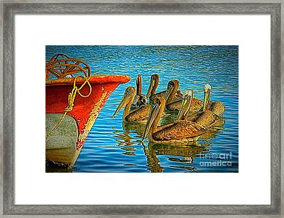 Waiting For The Next Meal Framed Print