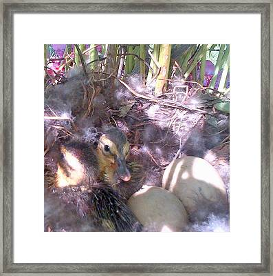 Waiting For The Others Framed Print by Barbara McDevitt