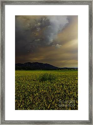 Waiting For The Rain To Come Framed Print by Mitch Shindelbower