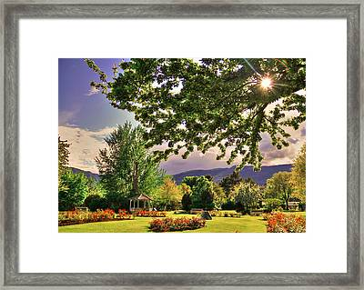 Waiting For The Roses To Bloom Framed Print by Eti Reid