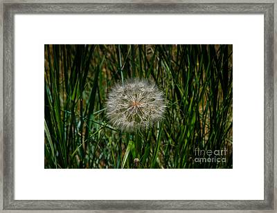 Waiting For The Wind Framed Print