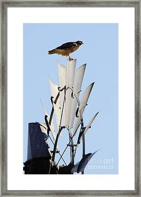Waiting For The Wind Framed Print by Robert Frederick