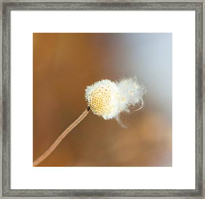 Waiting For The Wind Framed Print by Sarah Crites