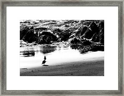Waiting For Their Meal Black And White Framed Print