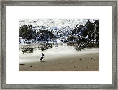 Waiting For Their Meal Framed Print