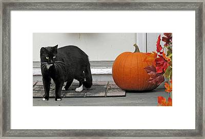 Waiting For Trick Or Treaters Framed Print