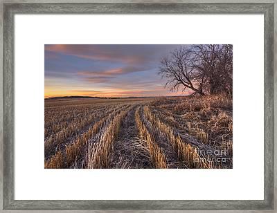 Waiting For Winter Framed Print