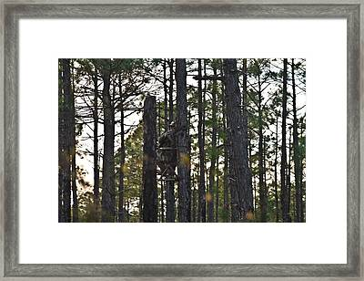 Waiting Game Framed Print by Jessica Brown