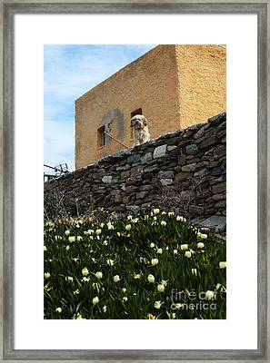 Waiting In Delos For You Framed Print by John Rizzuto