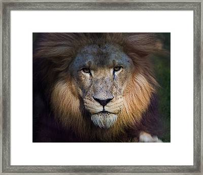 Waiting In The Shadows Framed Print by Tim Stanley