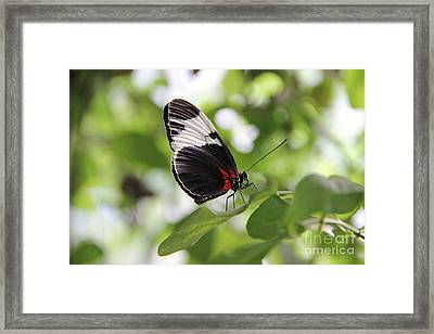 Waiting Framed Print by Jackie Mestrom