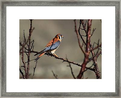 Waiting Framed Print by Lynn Hopwood