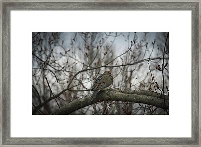Framed Print featuring the photograph Waiting On Spring by Phil Abrams