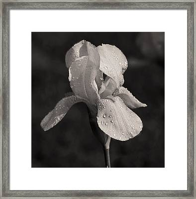 Waiting On The Iris Framed Print by Mamie Thornbrue