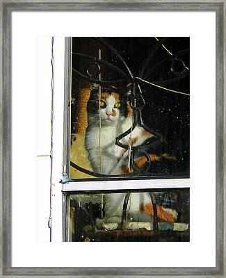 Waiting On The Rain Framed Print