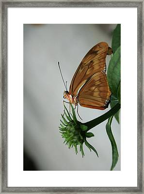 Butterfly Waiting On The Wind  Framed Print