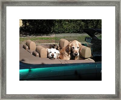 Waiting Patiently Framed Print by Cheryl Hoyle