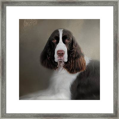 Waiting Patiently - English Springer Spaniel Framed Print