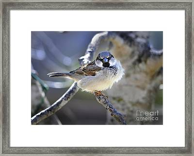 Waiting Patiently Framed Print by Nava Thompson