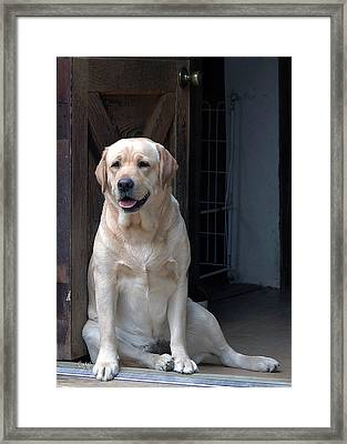 Framed Print featuring the photograph Waiting Patiently by Sami Martin