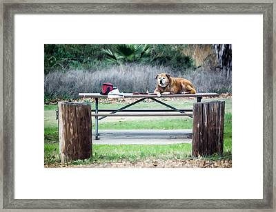 Waiting Patiently Framed Print by Photographic Art by Russel Ray Photos