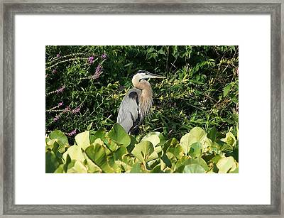 Waiting Framed Print by Thomas Fouch