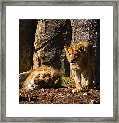 Waiting To Be King Framed Print