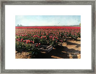 Framed Print featuring the photograph Waiting To Be Picked by Sylvia Cook