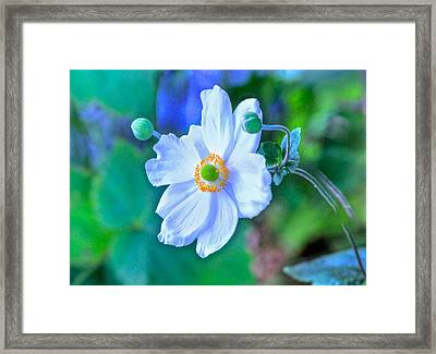 Flower 13 Framed Print