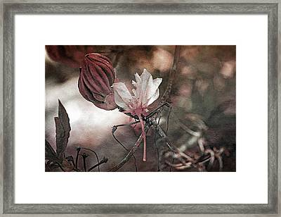Waiting To Blossom Framed Print by Bonnie Bruno