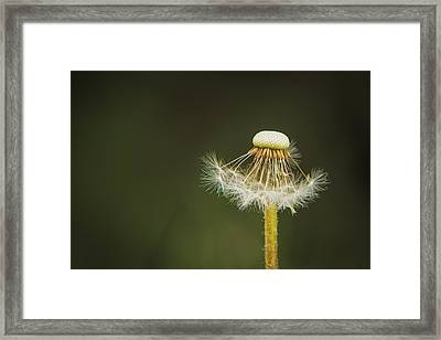 Waiting To Dance Framed Print