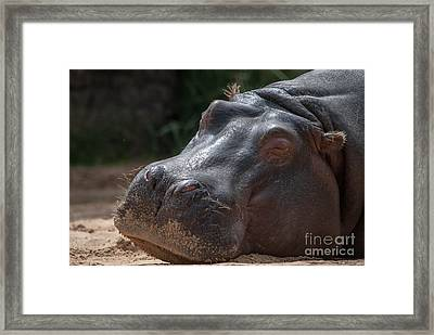Wake Me When Its Over Framed Print