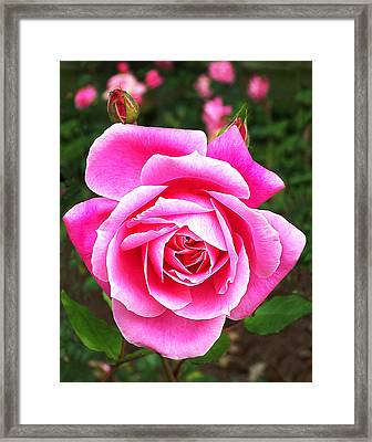 Wake Up And Smell The Roses Framed Print